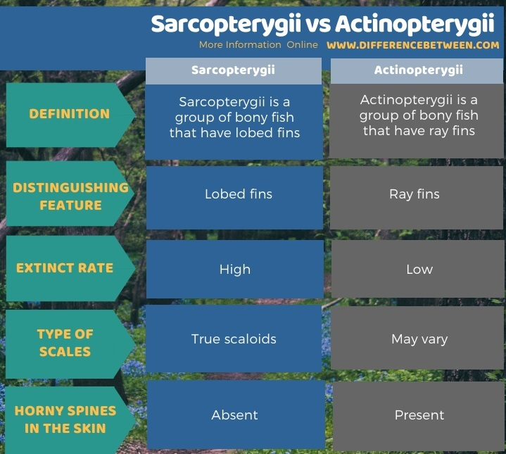 Difference Between Sarcopterygii and Actinopterygii in Tabular Form