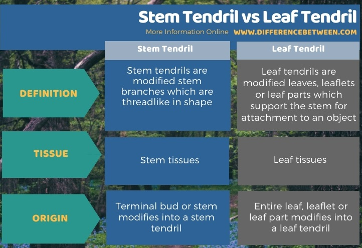 Difference Between Stem Tendril and Leaf Tendril in Tabular Form