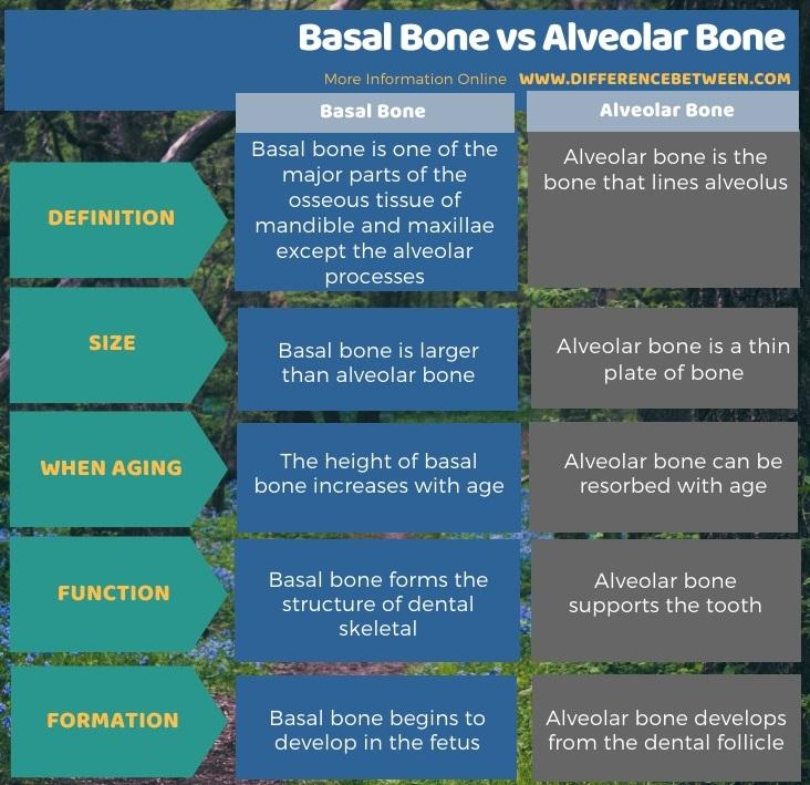 Difference Between Basal Bone and Alveolar Bone in Tabular Form