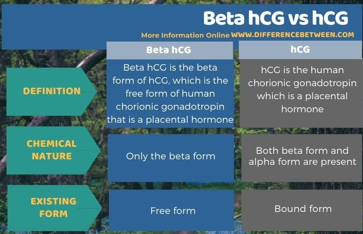 Difference Between Beta hCG and hCG in Tabular Form