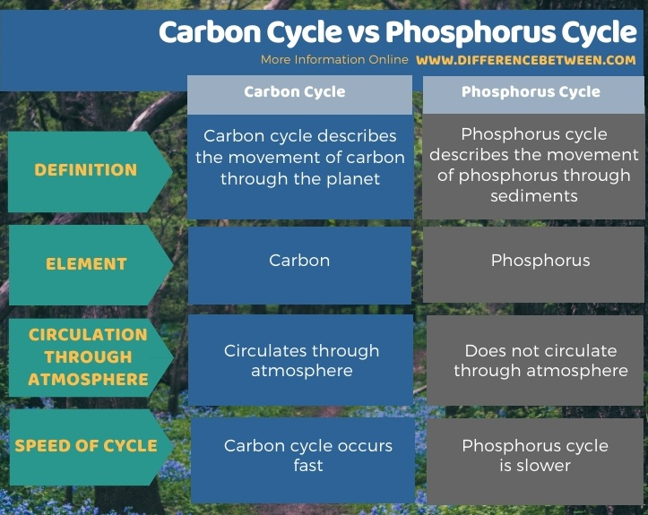 Difference Between Carbon Cycle and Phosphorus Cycle in Tabular Form
