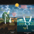 Difference Between Carbon Cycle and Phosphorus Cycle
