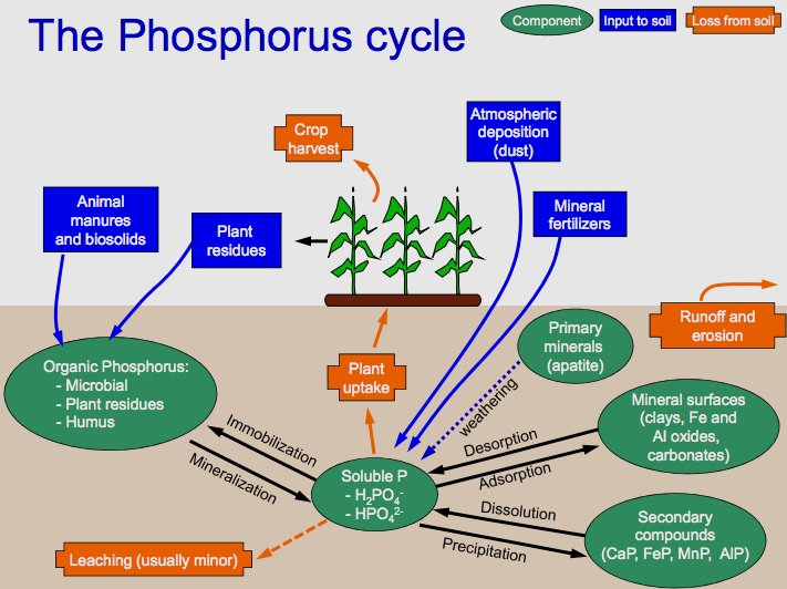 Key Difference - Carbon Cycle vs Phosphorus Cycle