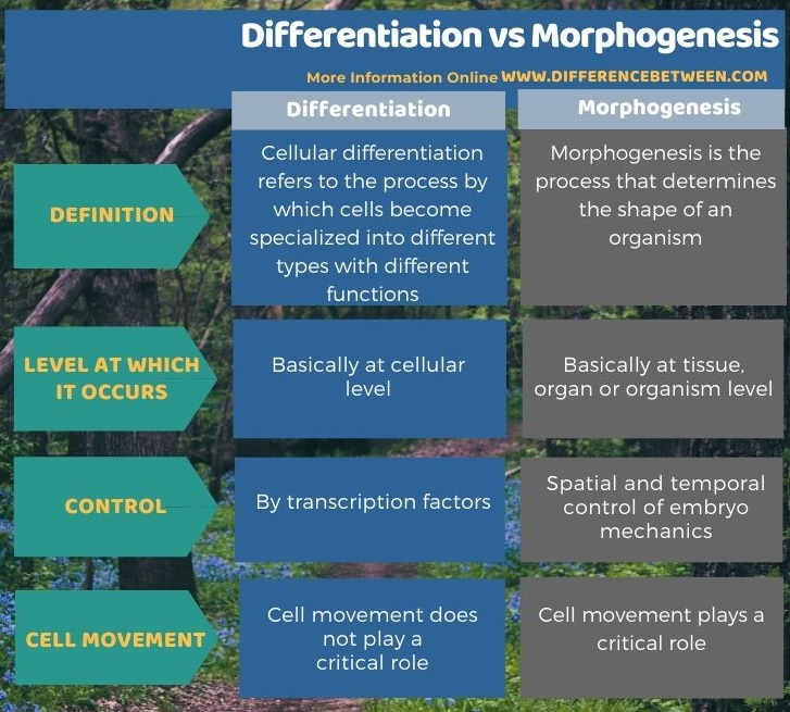 Difference Between Differentiation and Morphogenesis in Tabular Form