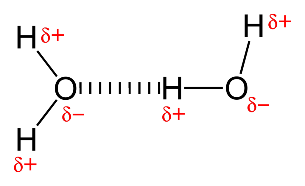 Key Difference - Salt Bridge vs Hydrogen Bond