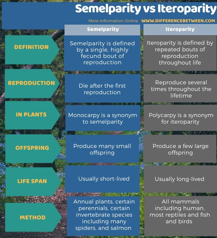 Difference Between Semelparity and Iteroparity in Tabular Form