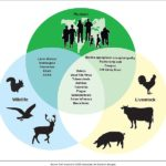 Difference Between Zoonotic and Vector Borne Diseases