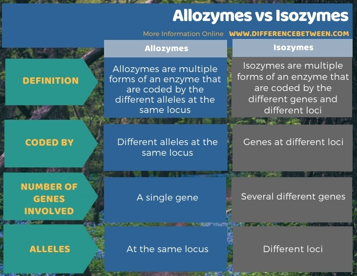 Difference Between Allozymes and Isozymes in Tabular Form