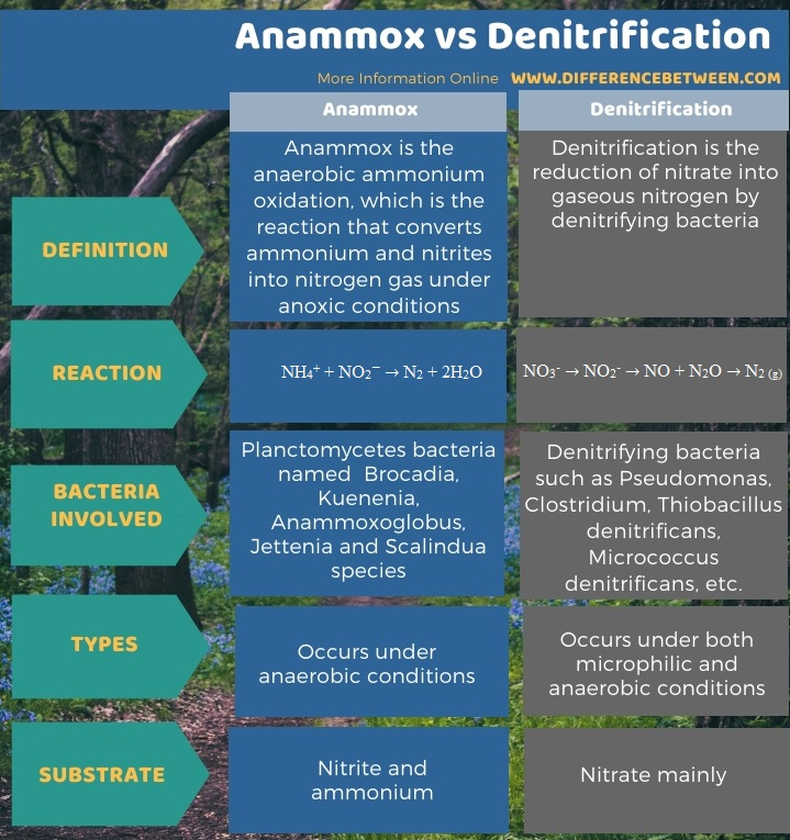 Difference Between Anammox and Denitrification in Tabular Form