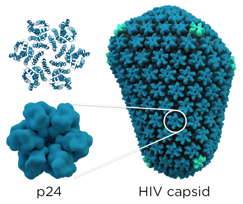 Difference Between Capsid and Capsomere