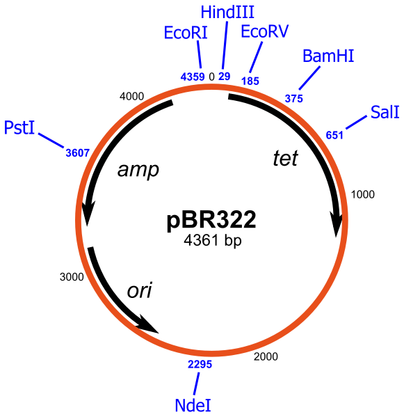 Difference Between F Plasmid and R Plasmid