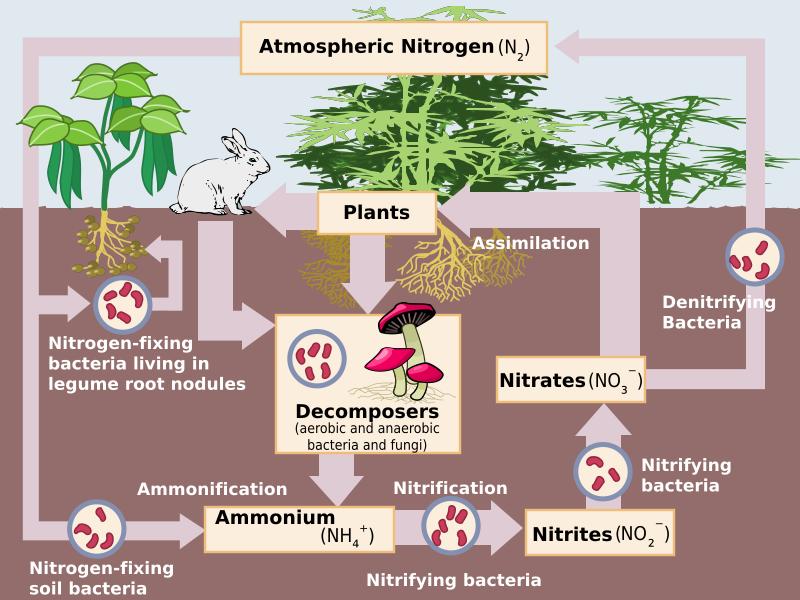 Key Difference - Gaseous vs Sedimentary Biogeochemical Cycles