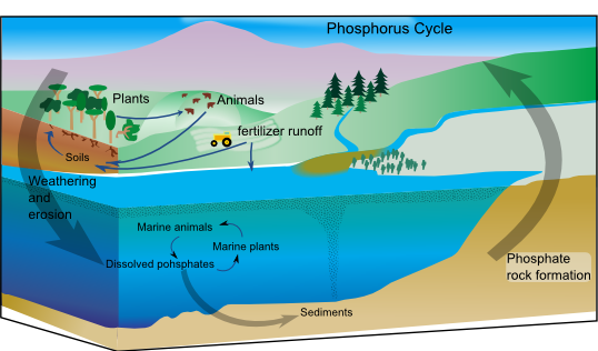 Difference Between Gaseous and Sedimentary Biogeochemical Cycles