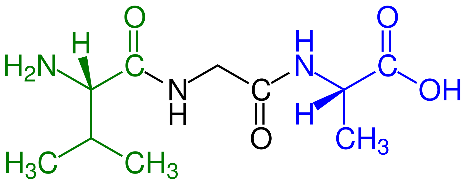 Key Difference - Oligopeptide vs Polypeptide