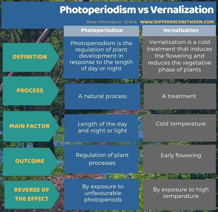 Difference Between Photoperiodism and Vernalization in Tabular Form