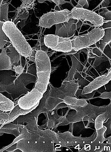 Key Difference - Photosynthetic vs Chemosynthetic Bacteria