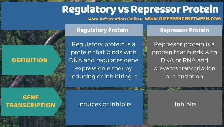 Difference Between Regulatory and Repressor Protein in Tabular Form