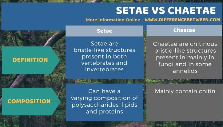 Difference Between Setae and Chaetae in Tabular Form