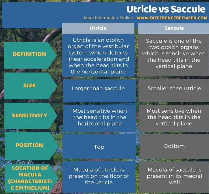 Difference Between Utricle and Saccule in Tabular Form