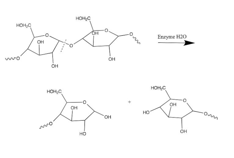 Key Difference - Acid Hydrolysis vs Enzymatic Hydrolysis