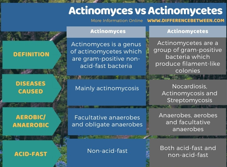 Difference Between Actinomyces and Actinomycetes in Tabular Form