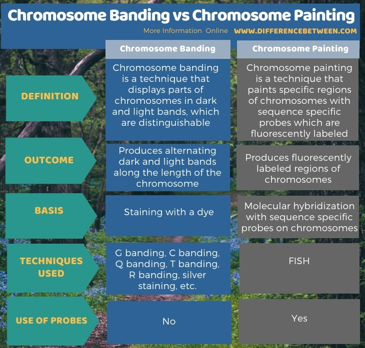 Difference Between Chromosome Banding and Chromosome Painting in Tabular Form