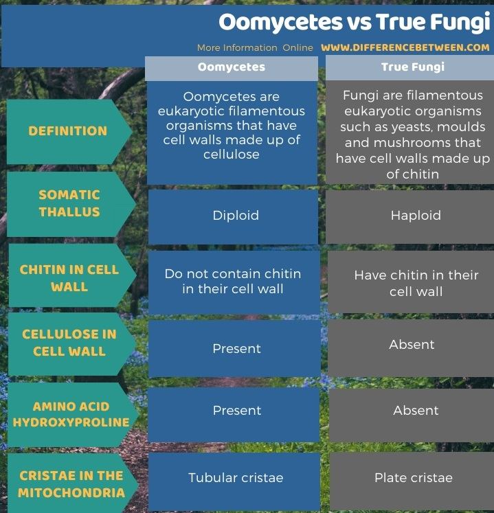 Difference Between Oomycetes and True Fungi in Tabular Form