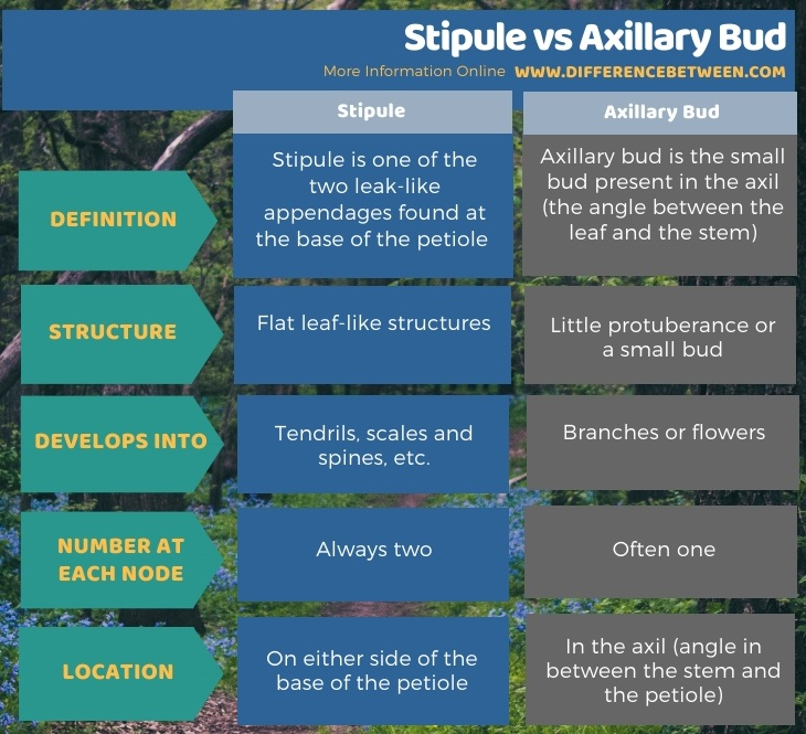 Difference Between Stipule and Axillary Bud in Tabular Form