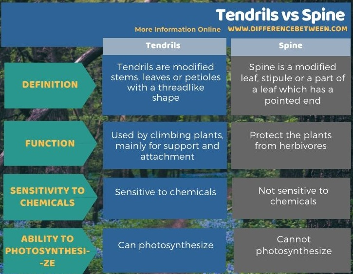 Difference Between Tendrils and Spine in Tabular Form