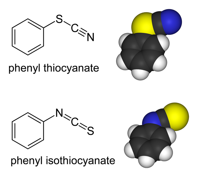 Difference Between Thiocyanate and Isothiocyanate