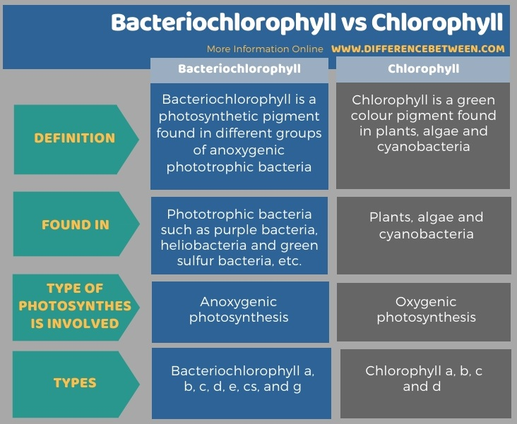 Difference Between Bacteriochlorophyll and Chlorophyll in Tabular Form