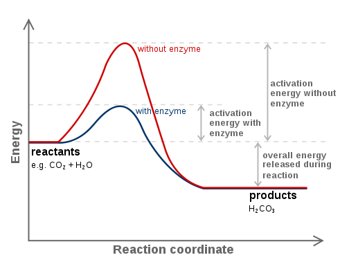 Key Difference - Catalytic vs Stoichiometric Reagents