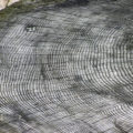 Difference Between Dendrochronology and Dendroclimatology