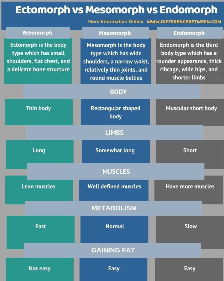 Difference Between Ectomorph Mesomorph and Endomorph in Tabular Form