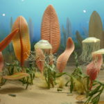 Difference Between Ediacaran Extinction and Cambrian Explosion