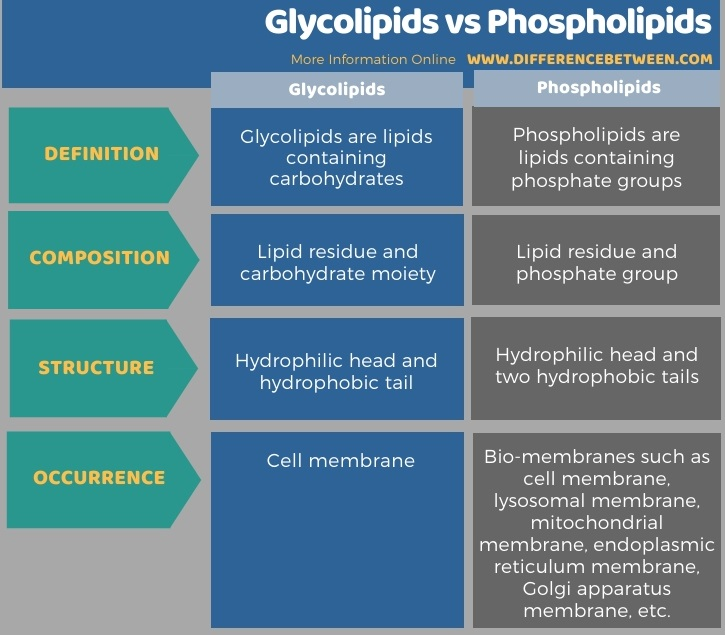 Difference Between Glycolipids and Phospholipids in Tabular Form