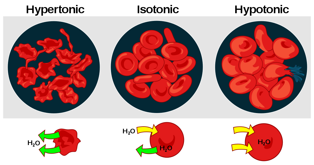 Key Difference - Isosmotic Hyperosmotic vs Hypoosmotic