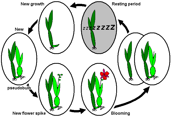 Difference Between Quiescence and Dormancy