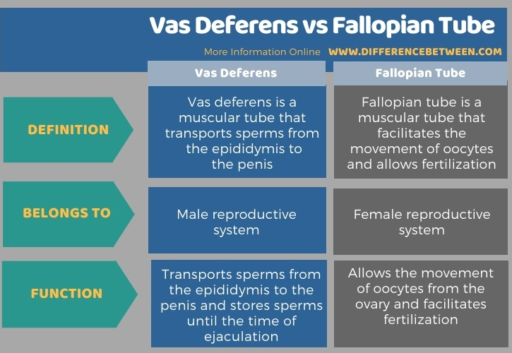 Difference Between Vas Deferens and Fallopian Tube in Tabular Form