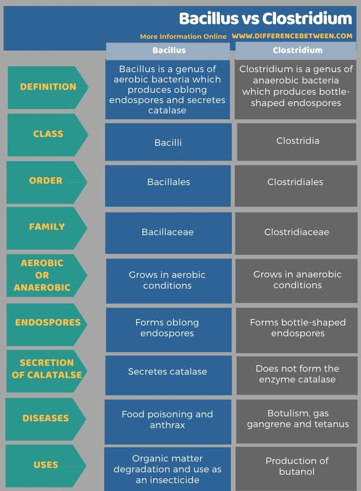 Difference Between Bacillus and Clostridium in Tabular Form