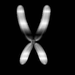Key Difference - Centromere vs Chromomere