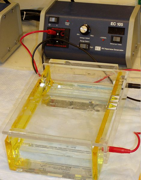 Key Difference - Electrophoresis vs Dielectrophoresis