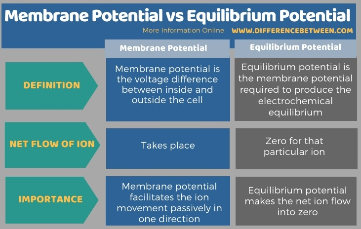 Difference Between Membrane Potential and Equilibrium Potential in Tabular Form