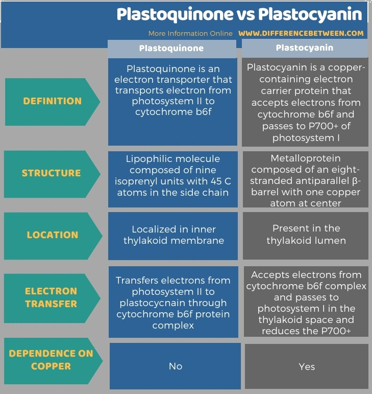 Difference Between Plastoquinone and Plastocyanin in Tabular Form