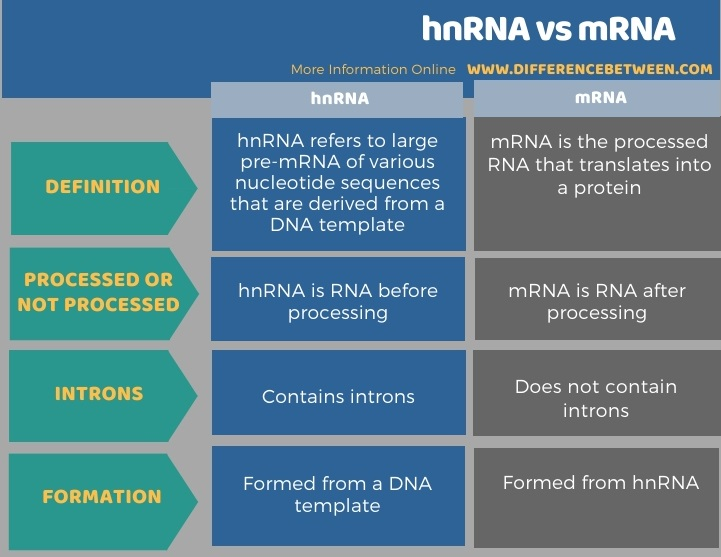 Difference Between hnRNA and mRNA in Tabular Form