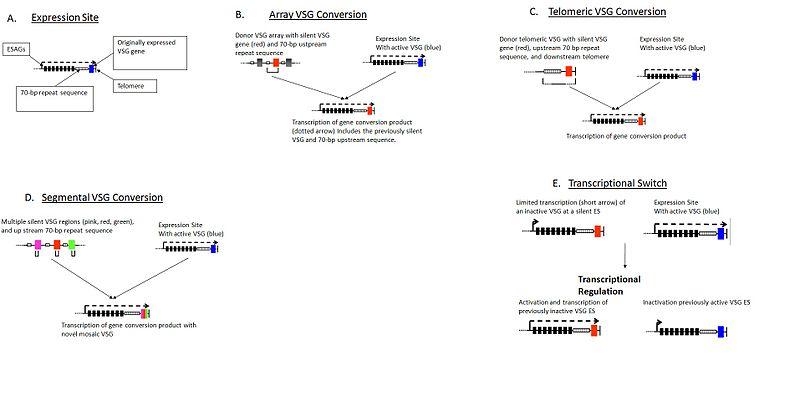 Key Difference - Antigenic vs Phase Variation