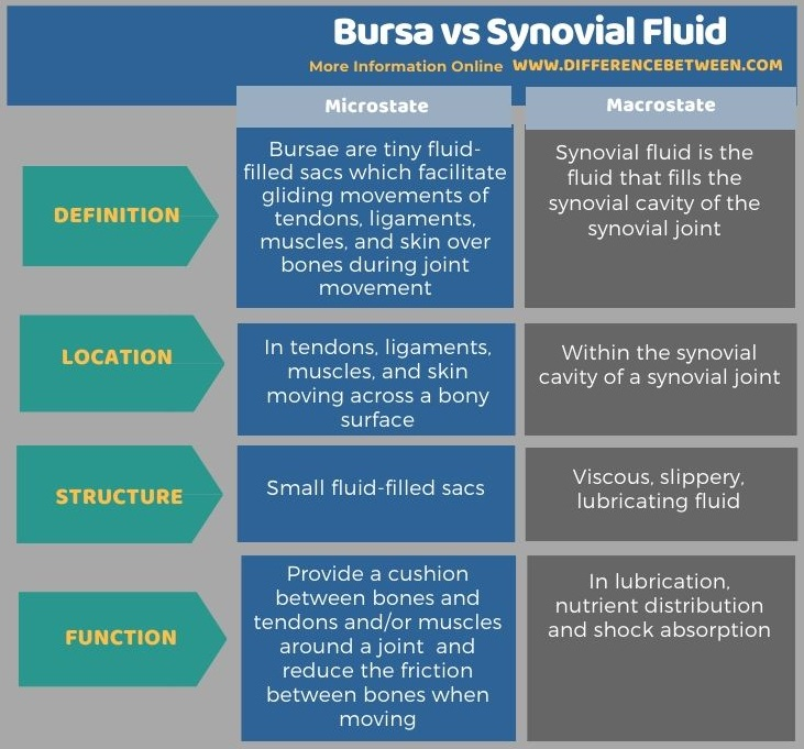 Difference Between Bursa and Synovial Fluid in Tabular Form