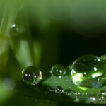 Difference Between Cohesion and Surface Tension