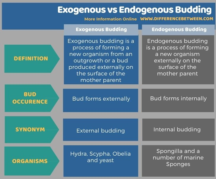 Difference Between Exogenous and Endogenous Budding in Tabular Form