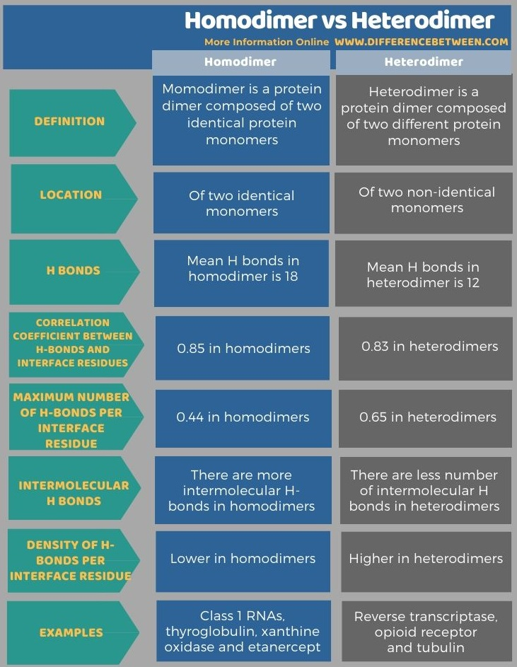 Difference Between Homodimer and Heterodimer in Tabular Form